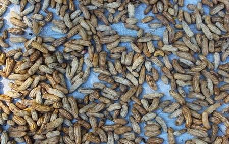 What Nut Grows Underground