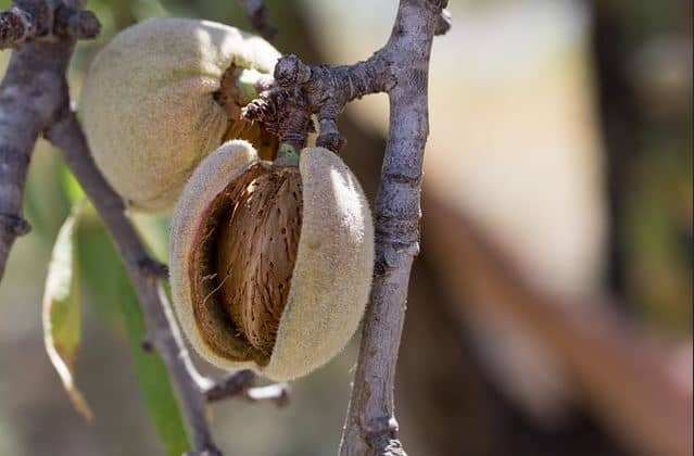 What Nuts Are Not Considered Tree Nuts