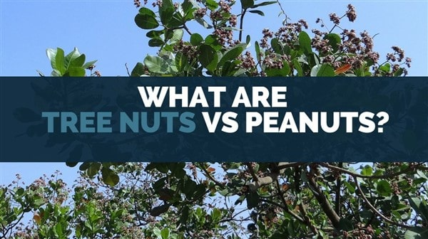 what are tree nuts vs peanuts
