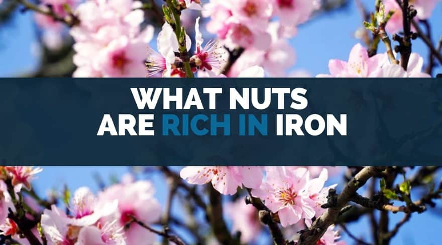 what nuts are rich in iron