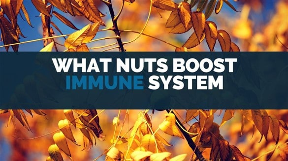 what nuts boot immune system