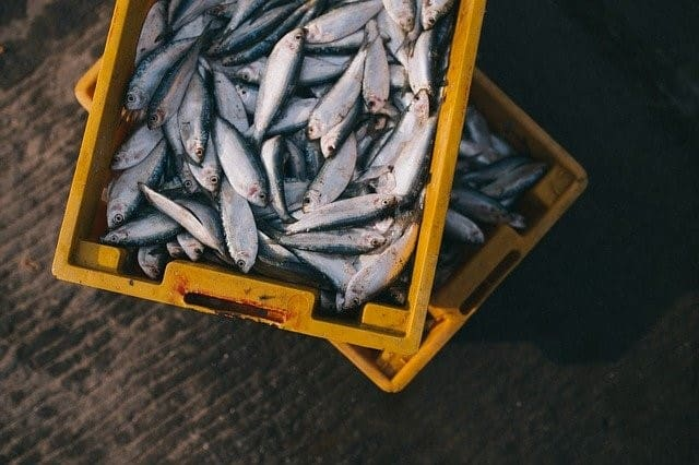 Do Blue Zones Eat Fish