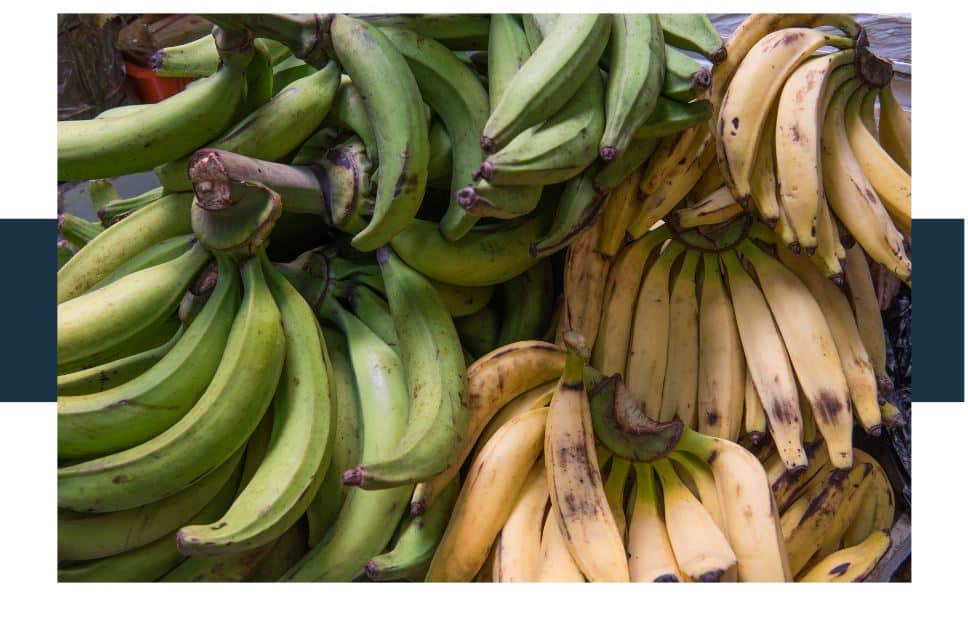 What Is The Difference Between Organic Bananas And Regular