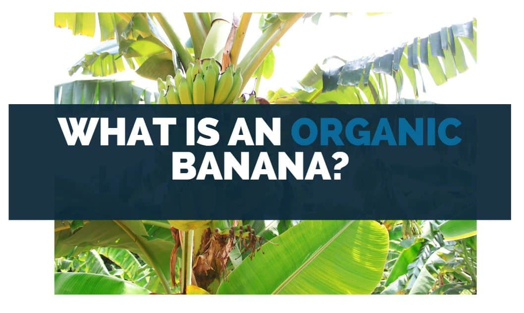 What Is an Organic Banana