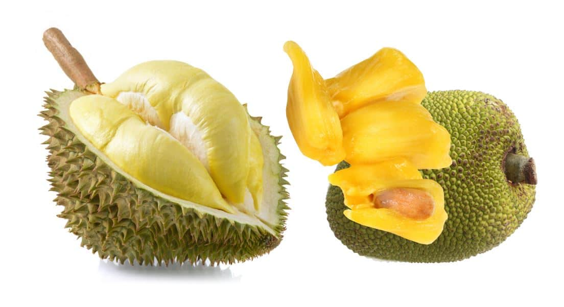 What are the similarities between jackfruit and durian
