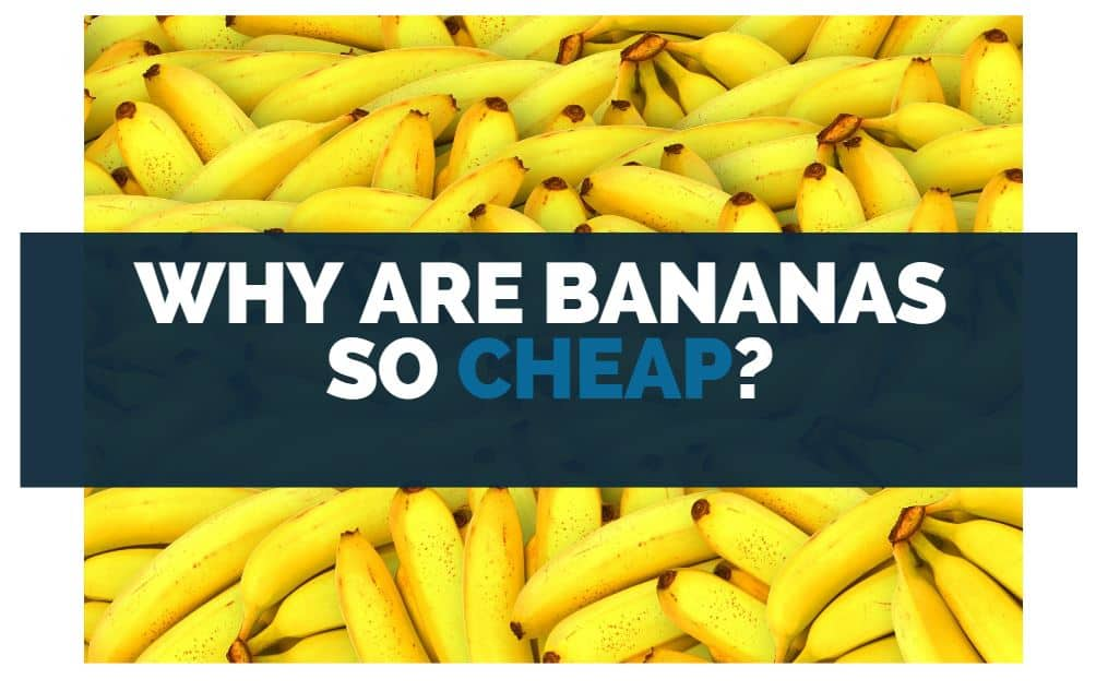 why are bananas so cheap