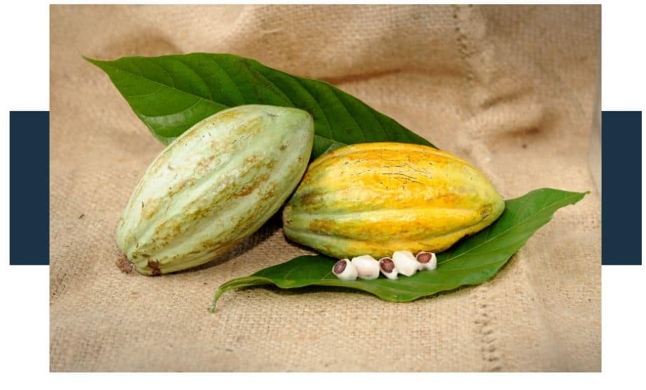 Are Cocoa Husks Edible
