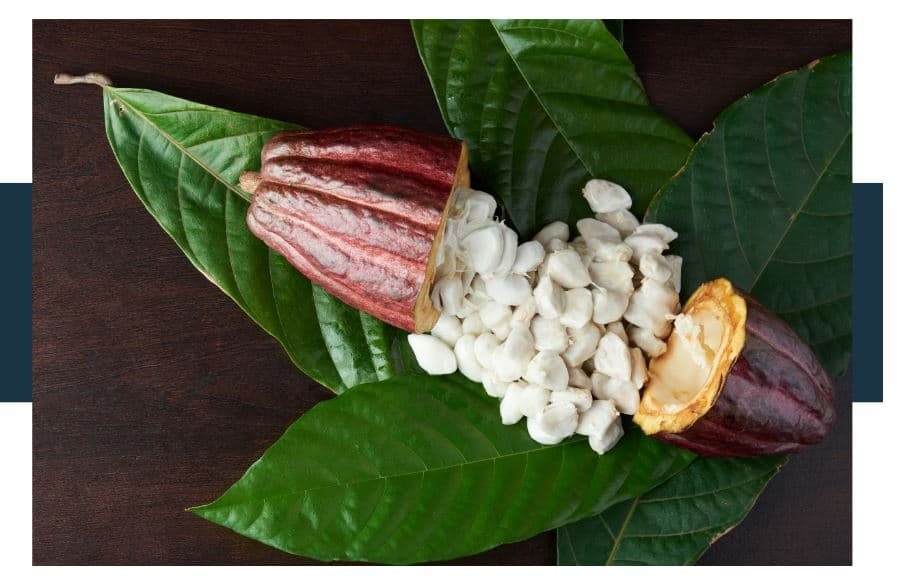 Are Raw Cacao Beans Nice To Eat