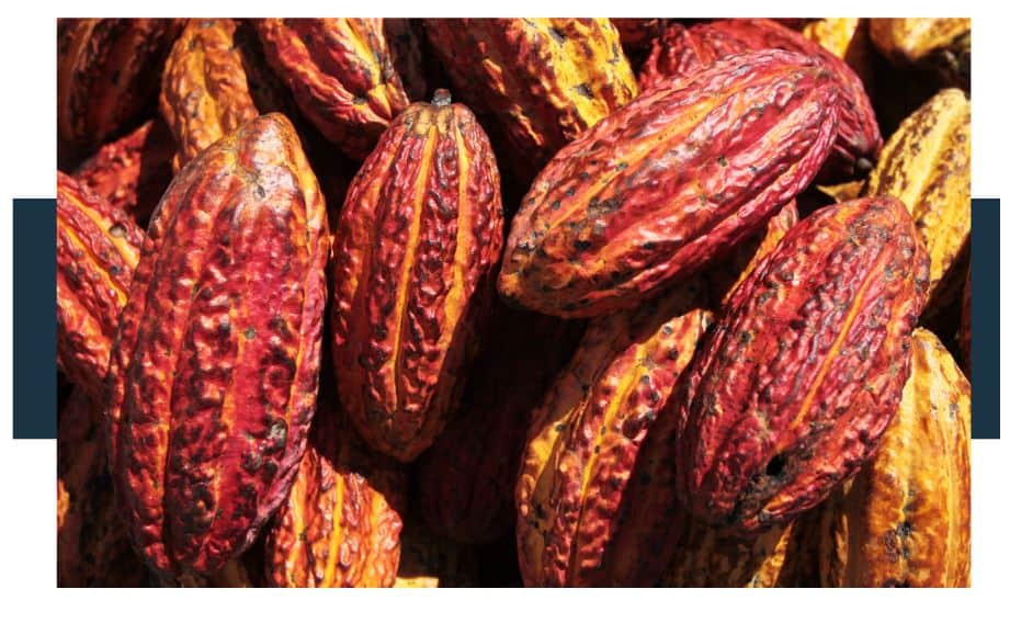 How To Tell When Cacao Pods Are Ripe