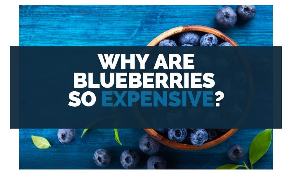why are blueberries so expensive