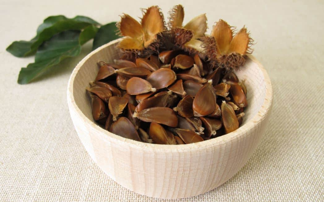How To Prepare Beech Nuts To Eat