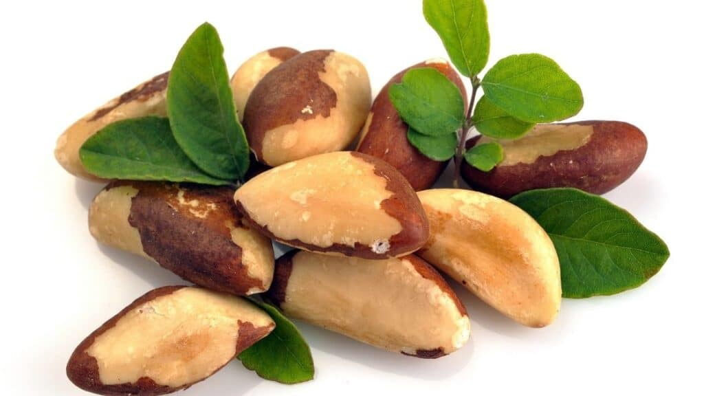 What Are Brazil Nuts