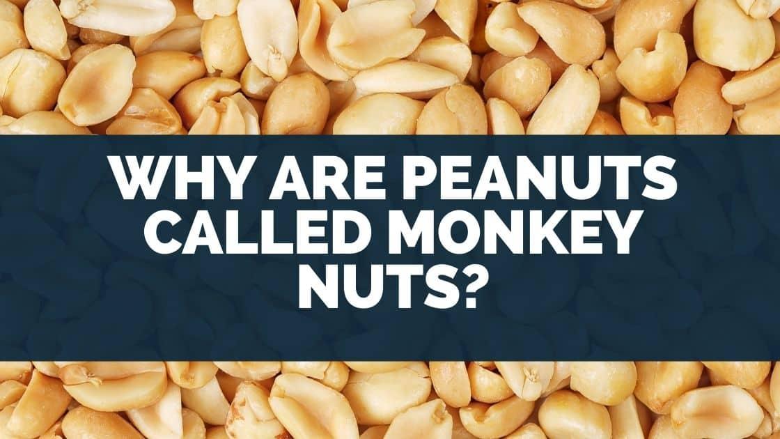 Peanuts Called Monkey Nuts