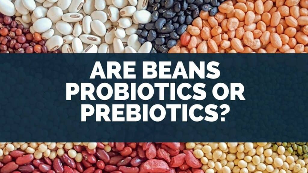 Are Beans Probiotics Or Prebiotics