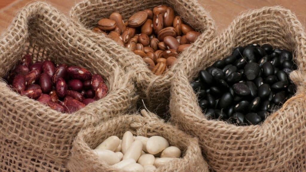 Do beans contain prebiotics