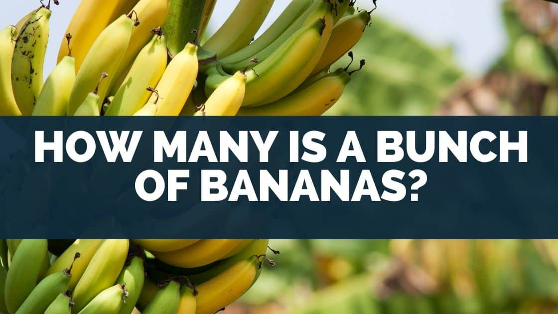 How Many Is a Bunch of Bananas