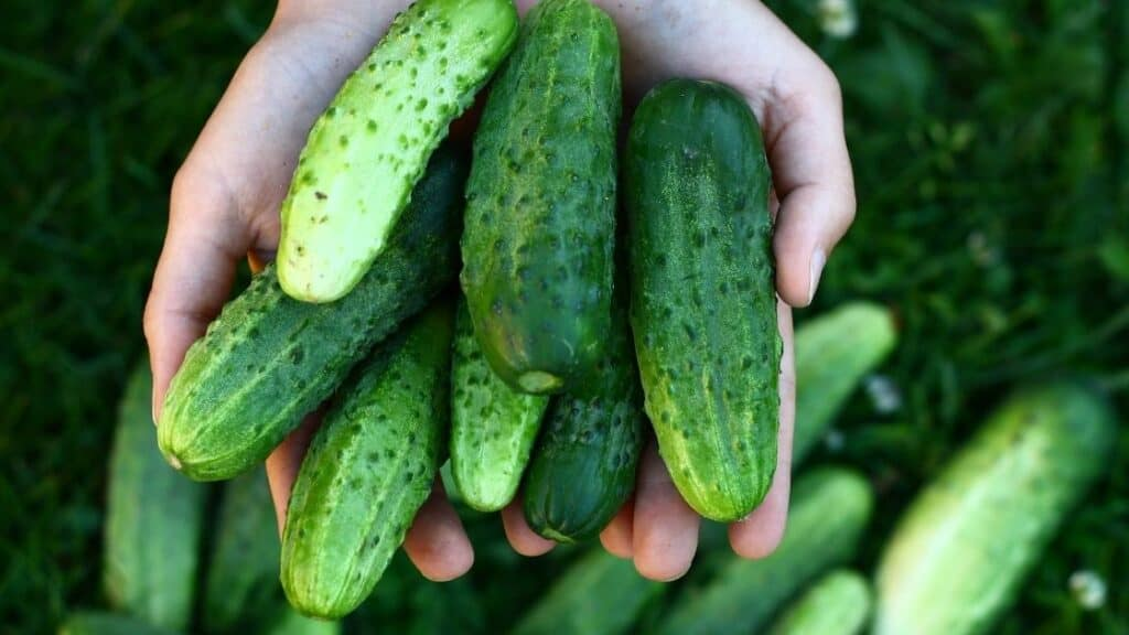 Are Cucumbers Keto