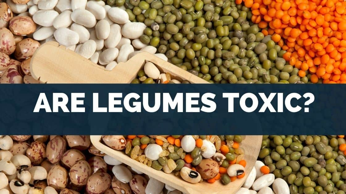 Are Legumes Toxic