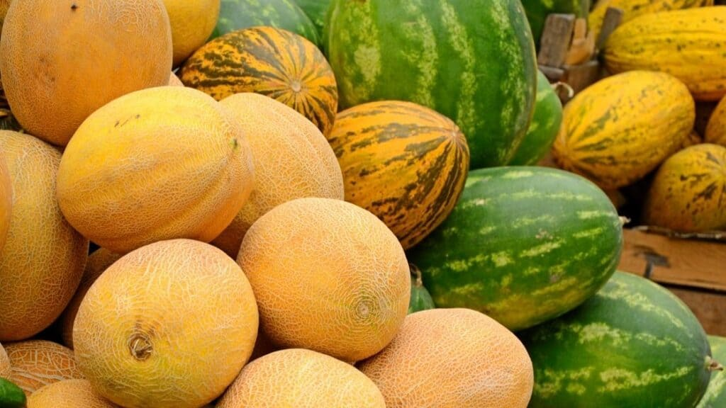 Are melons a vegetable