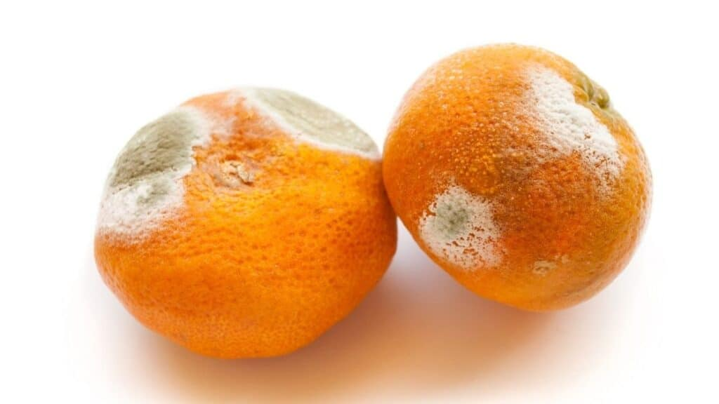 Can You Eat an Orange With Mold on the Peel
