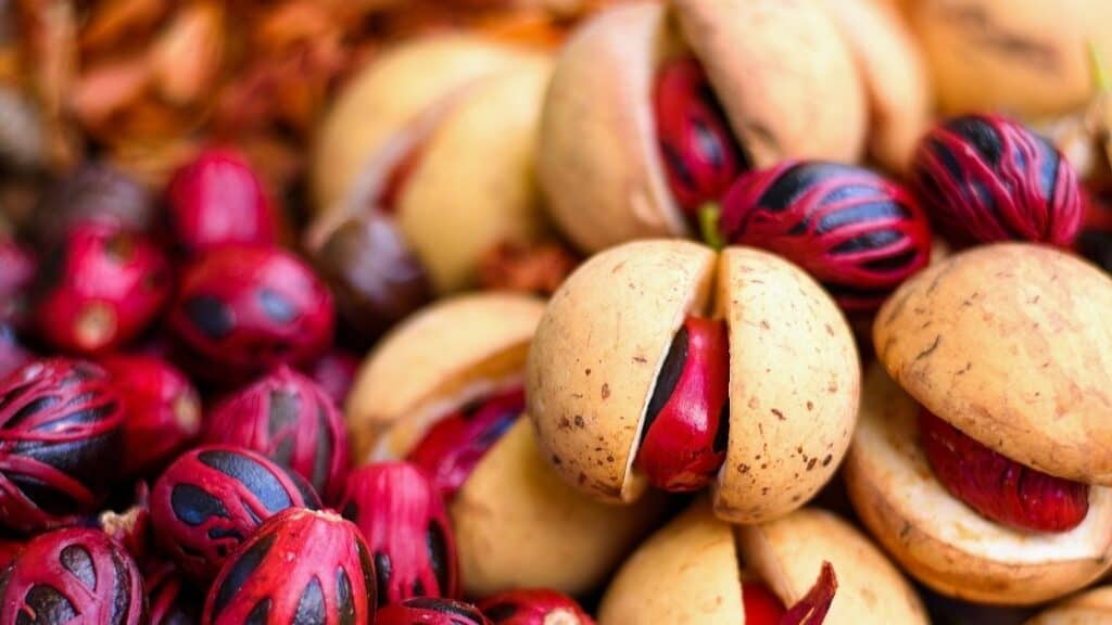 Can you grow nutmeg at home
