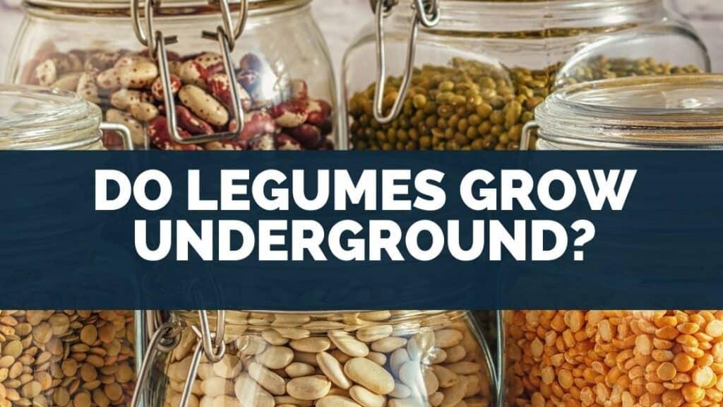Do Legumes Grow Underground