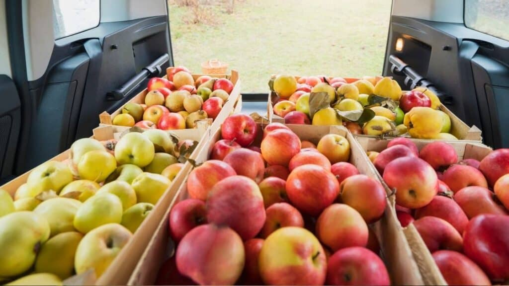 How Long Can Fruit Last in Car
