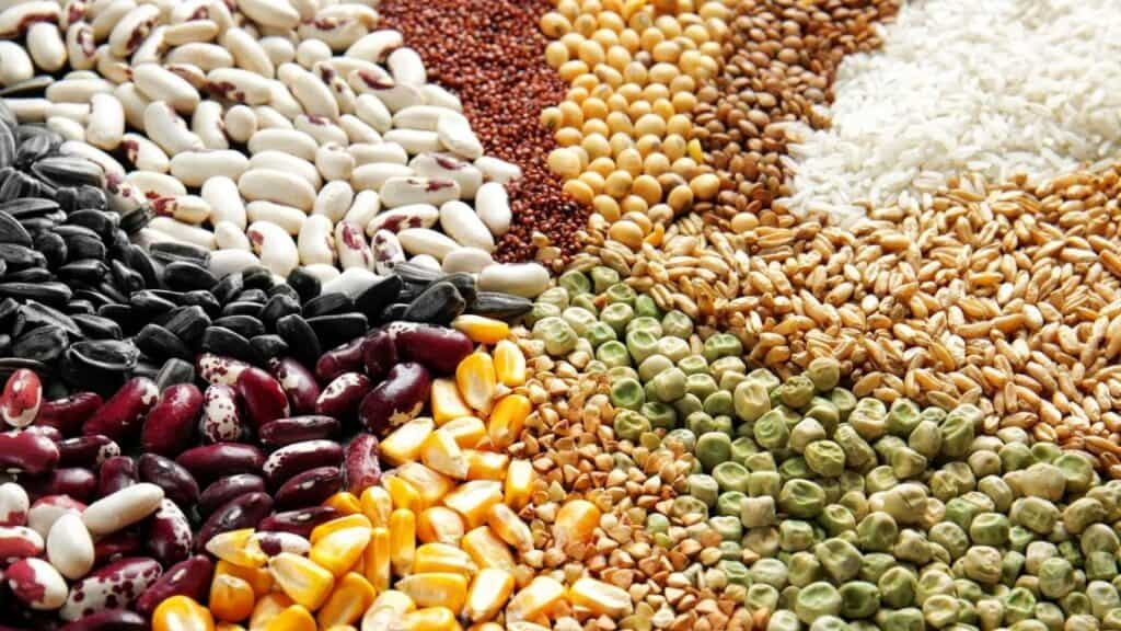 How are legumes and grains different