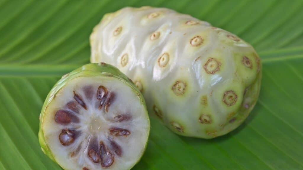 Is Noni Fruit Poisonous