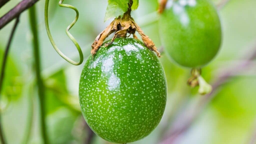 Should you eat passion fruit seeds