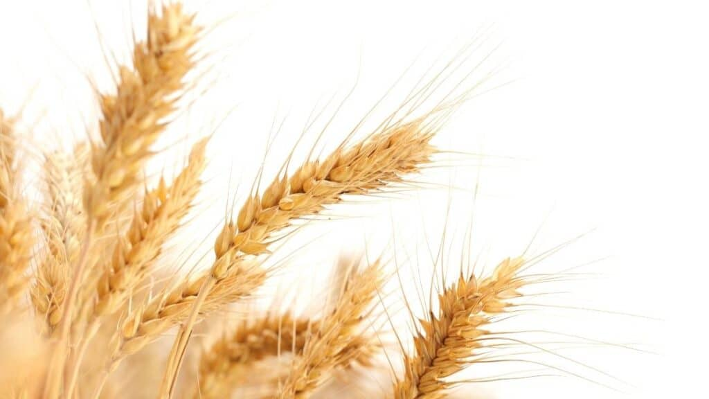 What ingredients should I avoid on a gluten-free diet