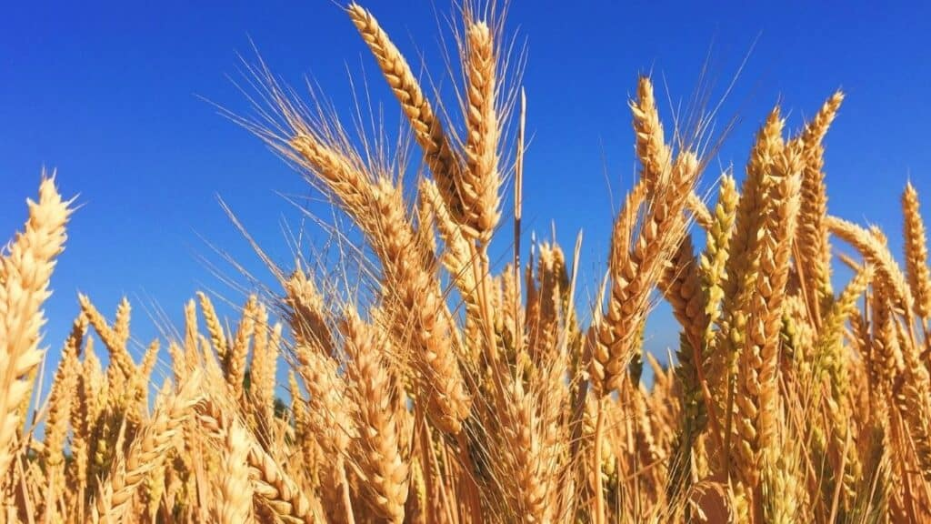 Which Grain Has the Lowest Glycemic Index