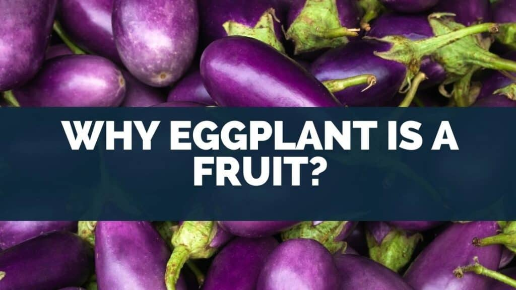 Why Eggplant Is a Fruit