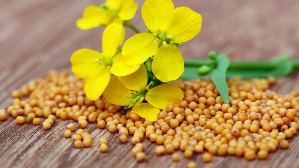 Are mustard seeds high in histamine