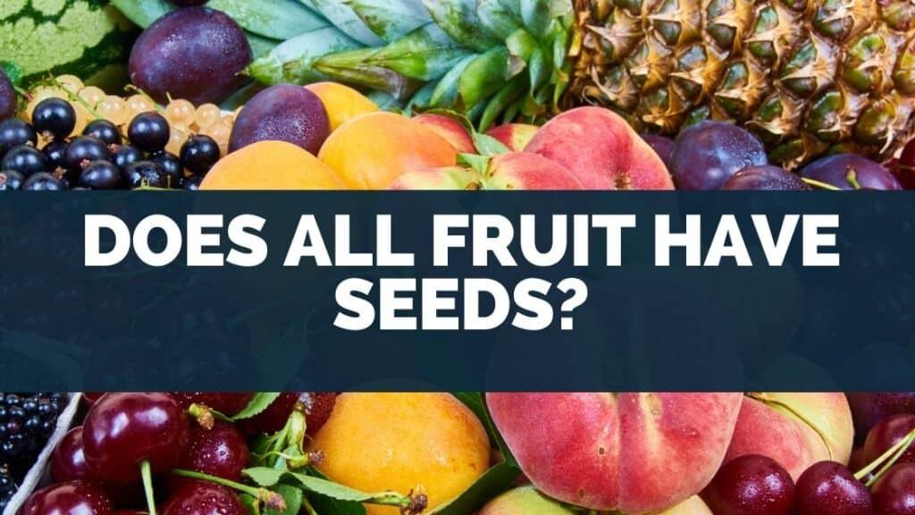 Does All Fruit Have Seeds