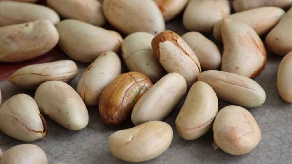 Roasted Jackfruit Seeds Benefits