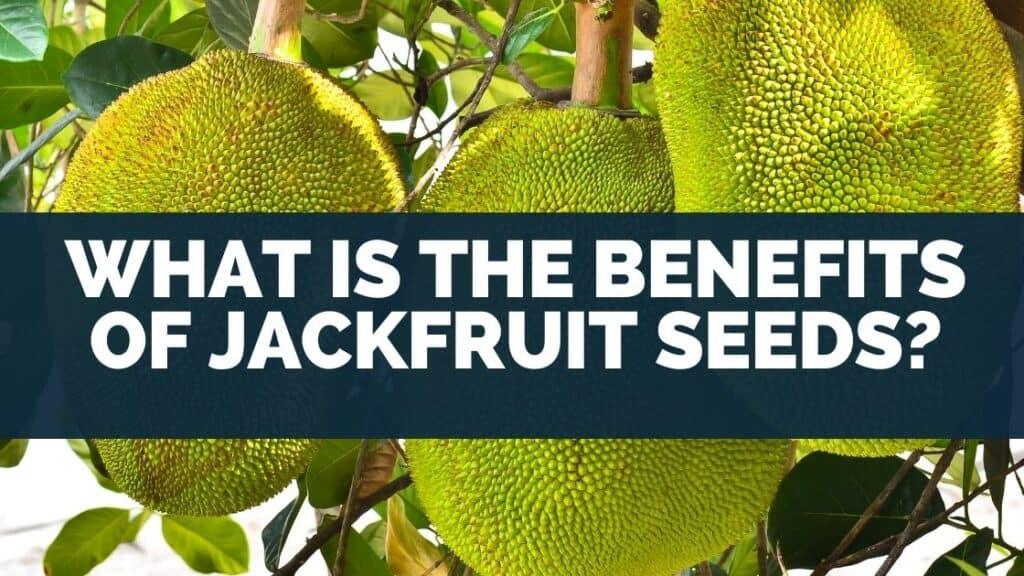 What Is the Benefits of Jackfruit Seeds