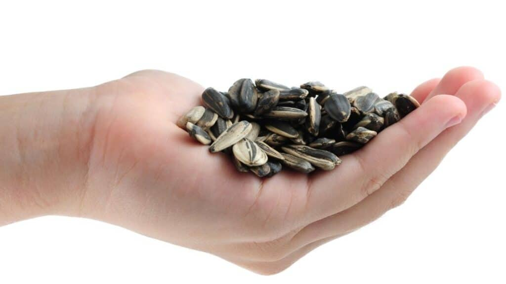 What Vitamins Are in Sunflower Seeds