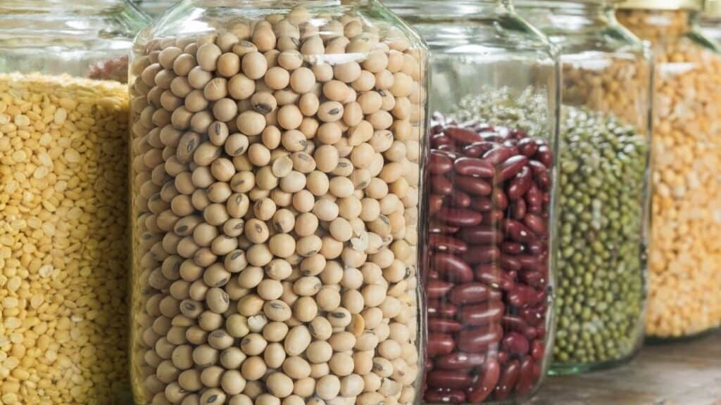 What is the legumes family
