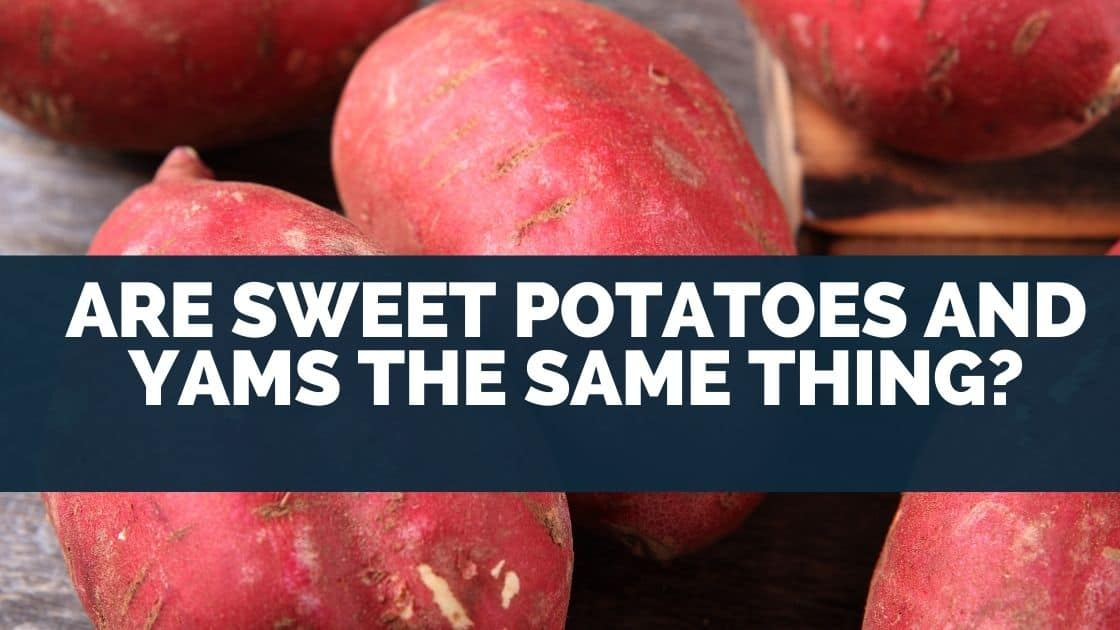 When I was growing up yams had bulges in skin and looked much different to a sweet potato. But, I noticed that in the USA they call sweet potatoes yams. I wanted to know if they're the same thing so I did some research into the origins of the words and what they mean, and here's what I found. Sweet potatoes and yams are not the same thing. In the USA the word yam is used to refer to sweet potatoes but they are from a different botanical family. Sweet potatoes and yams are root vegetables that share similar characteristics so the name yam was used, and ever since has remained. Today, I'll share the origins of the word yam, how yams and sweet potatoes differ. Interestingly, the word yam is used to refer to various different vegetables in different countries around the world, so I'll explain what vegetables these are too. Sweet Potato vs Yam Nutrition Since, sweet potatoes and yams are different vegetables. I wanted to know how they compare in the nutrients they contain. And whether one is healthier than the other. Here's a summary of nutritional differences between yams and sweet potatoes. Sweet potatoes are as healthy as yams. They both contain a fair amount of vitamins and minerals. Sweet potatoes are higher in some nutrients, whereas yams are higher in others. The major differences are the amount of Vitamin C, potassium, fiber, and sugar. Details provided below. I've compiled a table that shows a side by side comparison of the nutrients (vitamins and minerals) found in sweet potatoes and yams. Nutrient Yams Sweet Potatoes Protein 3.06% 3.14% Fat 0.39% 0.11% Fiber, total dietary 16.40% 12.00% Sugars, total including NLEA 2.08% 17.42% Calcium, Ca 0.68% 1.20% Iron, Fe 0.01% 0.01% Magnesium, Mg 5.25% 6.25% Phosphorus, P 7.86% 6.71% Potassium, K 17.36% 7.17% Sodium, Na 0.39% 2.39% Zinc, Zn 2.18% 2.73% Copper, Cu 12.71% 10.79% Manganese, Mn 19.85% 12.90% Selenium, Se 0.01% 0.01% Vitamin C, total ascorbic acid 19.00% 2.67% Thiamin 11.20% 7.80% Riboflavin 2.46% 4.69% Niaci