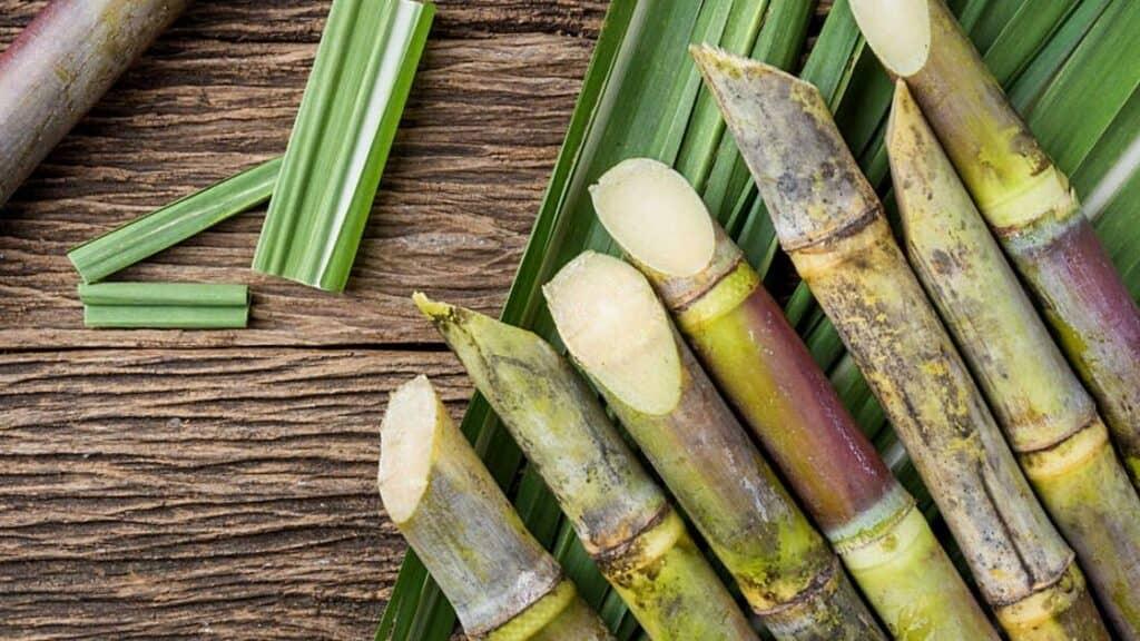 Can You Eat Raw Sugar Cane