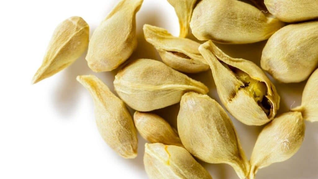 Do Orange Seeds Have Cyanide