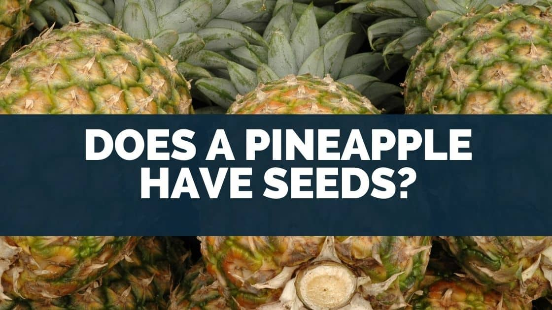 Does A Pineapple Have Seeds