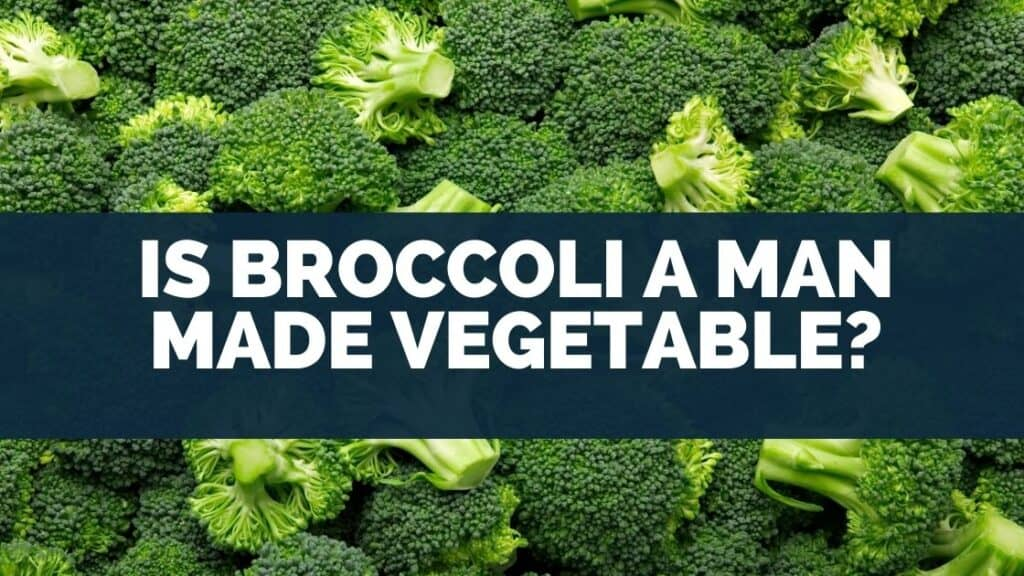 Is Broccoli a Man Made Vegetable