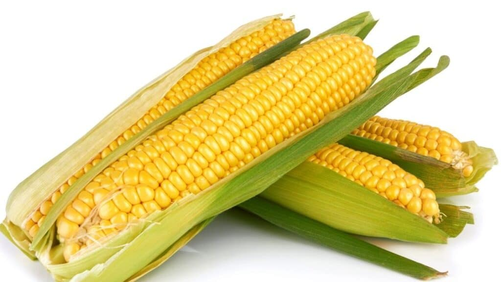 What Does Corn Smell Like When It Goes Bad