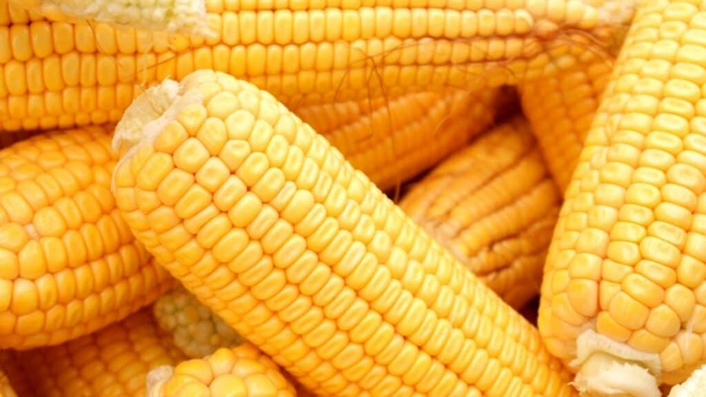 What Happens if You Don't Refrigerate Corn