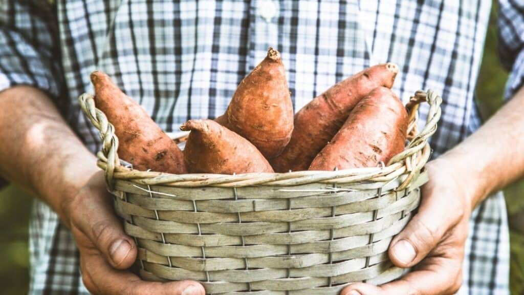 Are Sweet Potatoes Sprayed with Pesticides