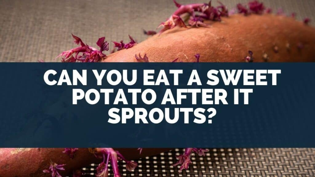 Can You Eat A Sweet Potato After It Sprouts